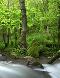 River in summer forest Royalty Free Stock Photo