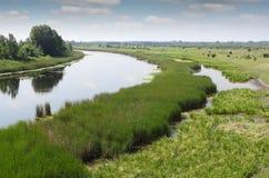 River summer landscape Stock Photos
