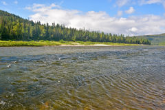 River summer landscape. Royalty Free Stock Image