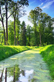 River in summer  park.  Nature composition. Stock Photos