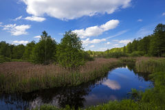 The river in the summer Stock Image