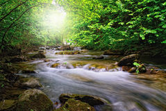 River with sun beam. In the forest Stock Image