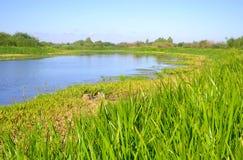 River at sunny day. Royalty Free Stock Photo