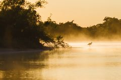 River before sunrise in the Pantanal stock image