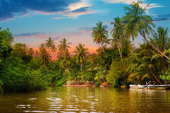 River,  sunrise and tropical palms. River, beautiful sunrise and tropical palms Royalty Free Stock Photography
