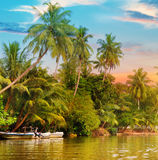 River,  sunrise and tropical palms. River, beautiful sunrise and tropical palms Royalty Free Stock Photo