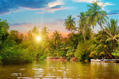 River, sunrise and tropical palms. River, beautiful sunrise and tropical palms Royalty Free Stock Photos