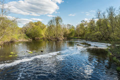 The river, the surface of the water is partially covered with foam and bubbles, on the shoreline there are trees and shrubs Royalty Free Stock Photography