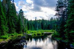 River surrounded by conifers Stock Photo