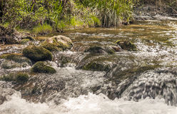 River surrounded by greenery Royalty Free Stock Photo