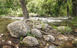River surrounded by greenery Stock Photography