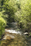 River surrounded by greenery Royalty Free Stock Images