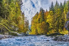 River Surrounded By Trees royalty free stock photo