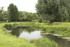 River surrounded by trees Royalty Free Stock Images