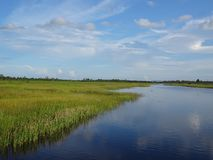 river and swamp grass Area in Florida Swamps stock photos