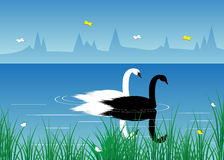 River and swans. Stock Photos