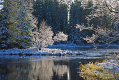 River in Sweden, winter Stock Photography