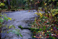 River swollen with rain water in the fall royalty free stock photos