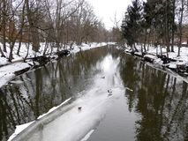 River Sysa and ducks in winter, Lithuania Stock Images