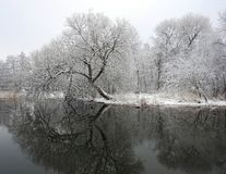 River Sysa and snowy trees in winter, Lithuania Royalty Free Stock Photo