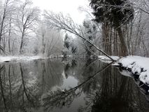 River Sysa and snowy trees in winter, Lithuania Stock Photos