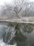 River Sysa and snowy trees in winter, Lithuania Stock Photography