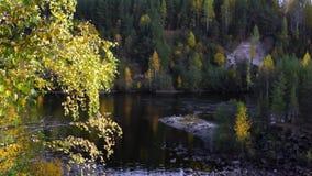 River in taiga in autumn stock video