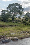 River in Tanzania Royalty Free Stock Photography