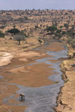 River Tarangire. Crosses the National Park of the same name. The park is famous for its huge number of elephants, baobab trees Stock Photography