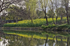 River teeming with life In the spring Royalty Free Stock Image