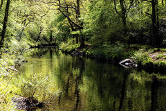 The River Teign wends its way through a wooded valley in Devon Stock Photography