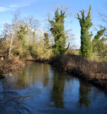 River Test, Hampshire. Trees reflected in the River Test on a sunny day Stock Photos
