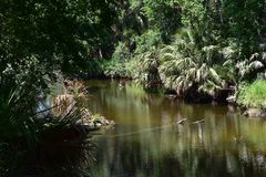 River and thick bush. River running through a dense bush Stock Photography