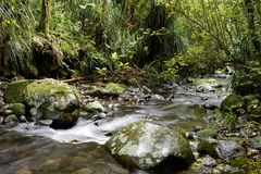 Free River Through A Forest Royalty Free Stock Photo - 120540895