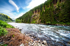 River Through Green Forest Royalty Free Stock Images