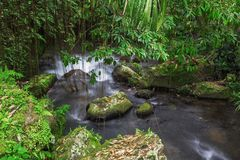 River throw rain forest Royalty Free Stock Photo