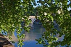 River Tiber in Rome. The famous river Tiber, bridge seen through tree leaves stock images