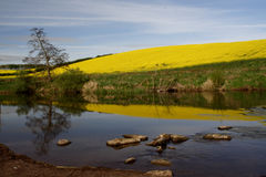 The River Till Royalty Free Stock Images