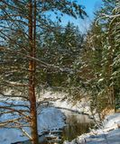 The river of time in the Christmas forest. Spring river flows through a Christmas forest on a clear Sunny day Royalty Free Stock Image