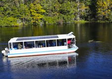 River Tour Boat and Manatees Stock Photography