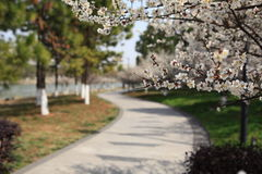 The view of spring Stock Photography