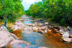 River. Trail in the tropical jungle of Amazonas Stock Image