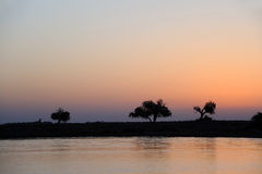 River and tree in dawn Stock Image