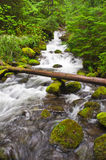 River Tree. Fallen tree crossing a river in Oregon Stock Images