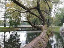 , river, tree royalty free stock images