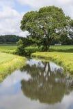 River & Tree Stock Photography