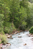 River with trees. Trees on the border of a mountain river Stock Photos
