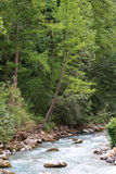 River with trees. Trees on the border of a mountain river Stock Images