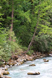 River with trees. Trees on the border of a mountain river Royalty Free Stock Photography