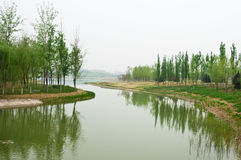 River with trees Stock Photography
